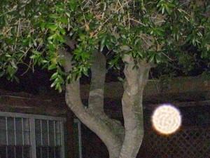 tree1night